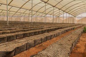 Auch innerhalb der Gewächshäuser wird Tröpfchenbewässerung angewendet.