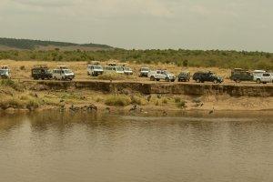 Safari-Touristen warten auf das Crossing, Kenia