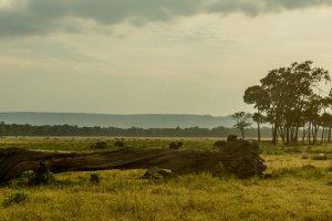 Abendstimmung in der Savanne, Kenia