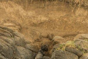 Ein Gnu schafft den Aufstieg nicht, Kenia