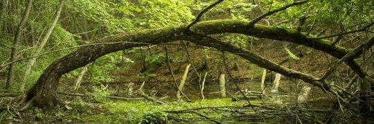 Tümpel in naturnahem Wald