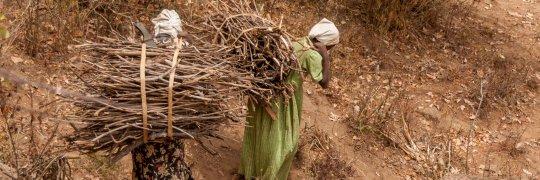 Mädchen tragen Brennholzbündel