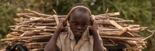 Junge trägt Brennholzbündel