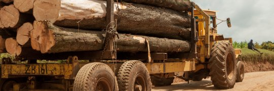 Abholzung des Mau-Waldes