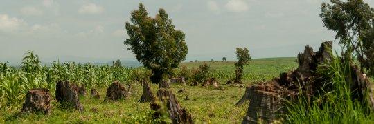 Umweltzerstörung als Armutsgrund