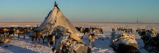 Lager von Rentierzüchtern auf der Jamal-Halbinsel